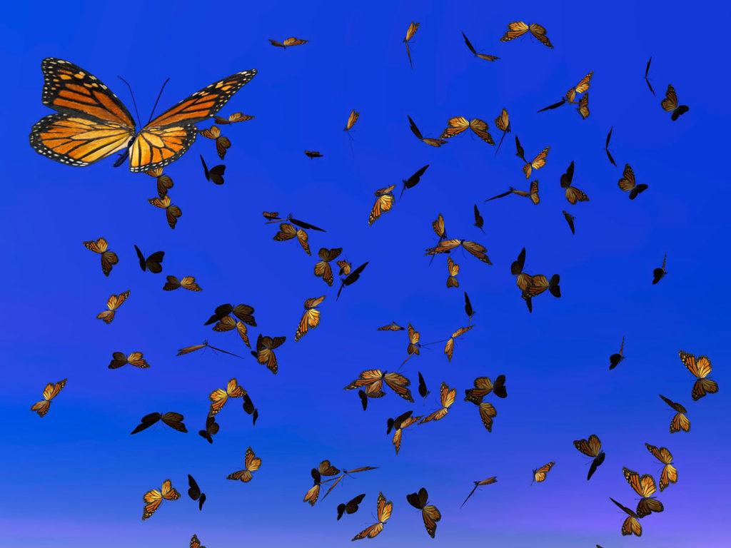monarca migration