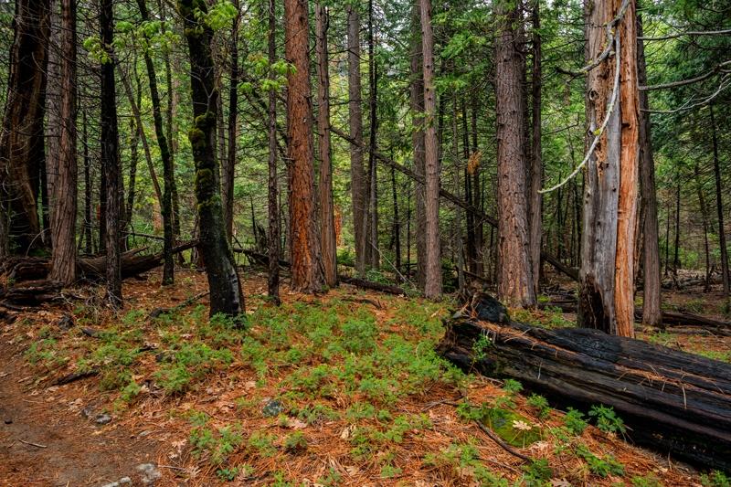 Descomponent la diversitat forestal