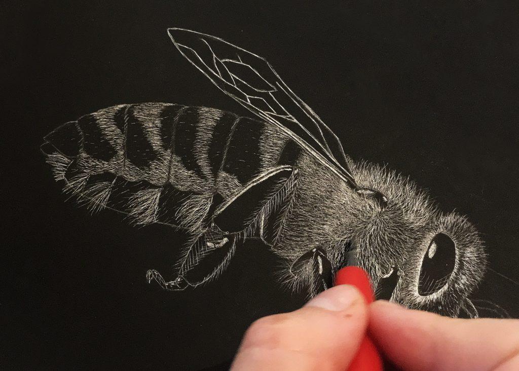 Il·lustrant la ciència: simbiosi entre animals i plantes
