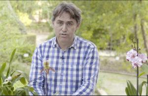 Ángel Sanchis - vídeo orquídea