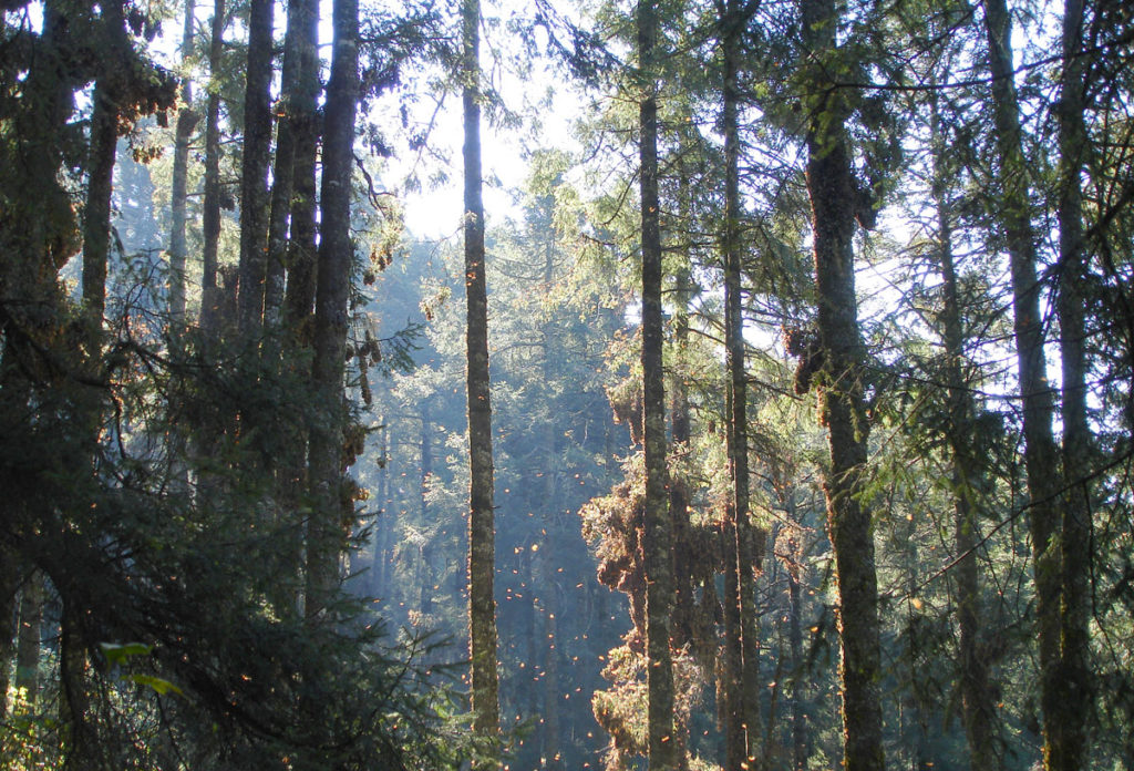 Reserva Biosfera Monarca