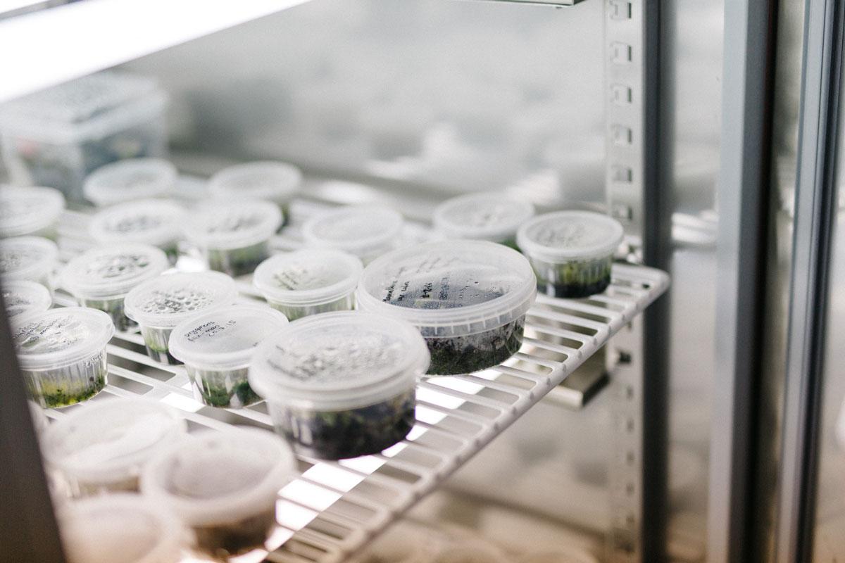 Col·leccions del Botànic - Herbari - Banc de germoplasma