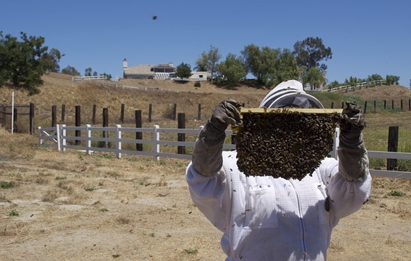 apicultura problemas