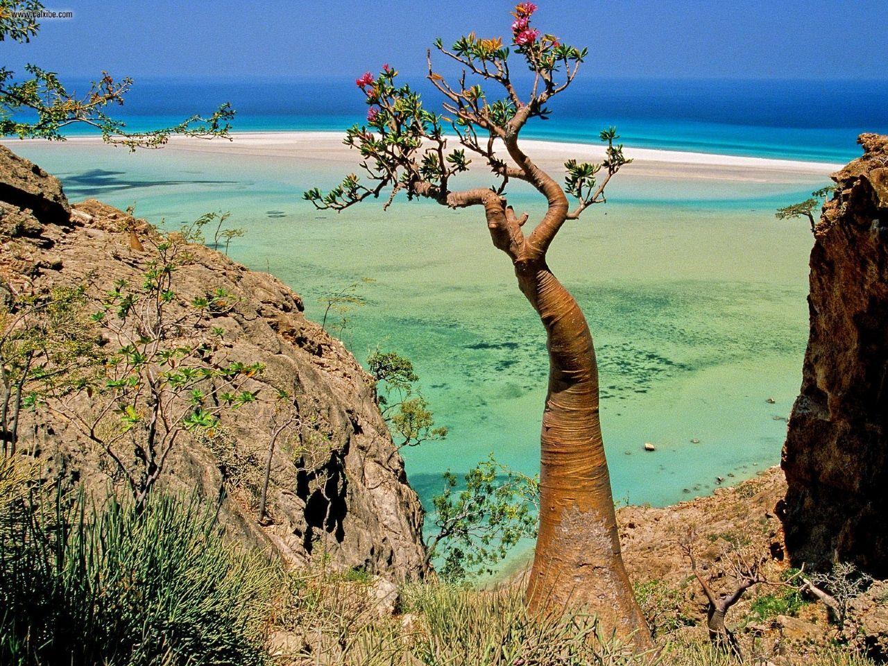 Socotra-Yemen_1