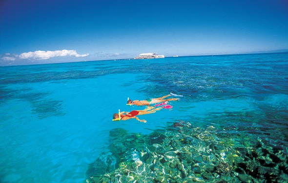 Whitsunday-Island-snorkel