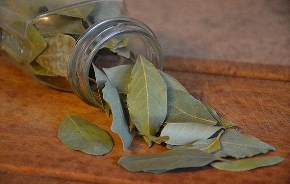 aromaticas laurel