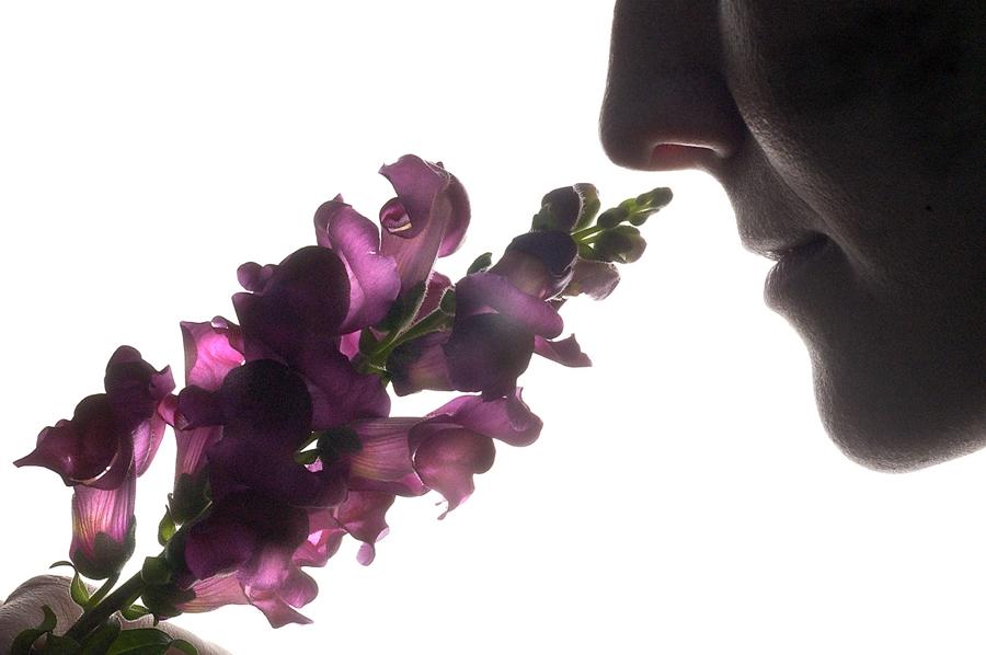 el_perfume_1