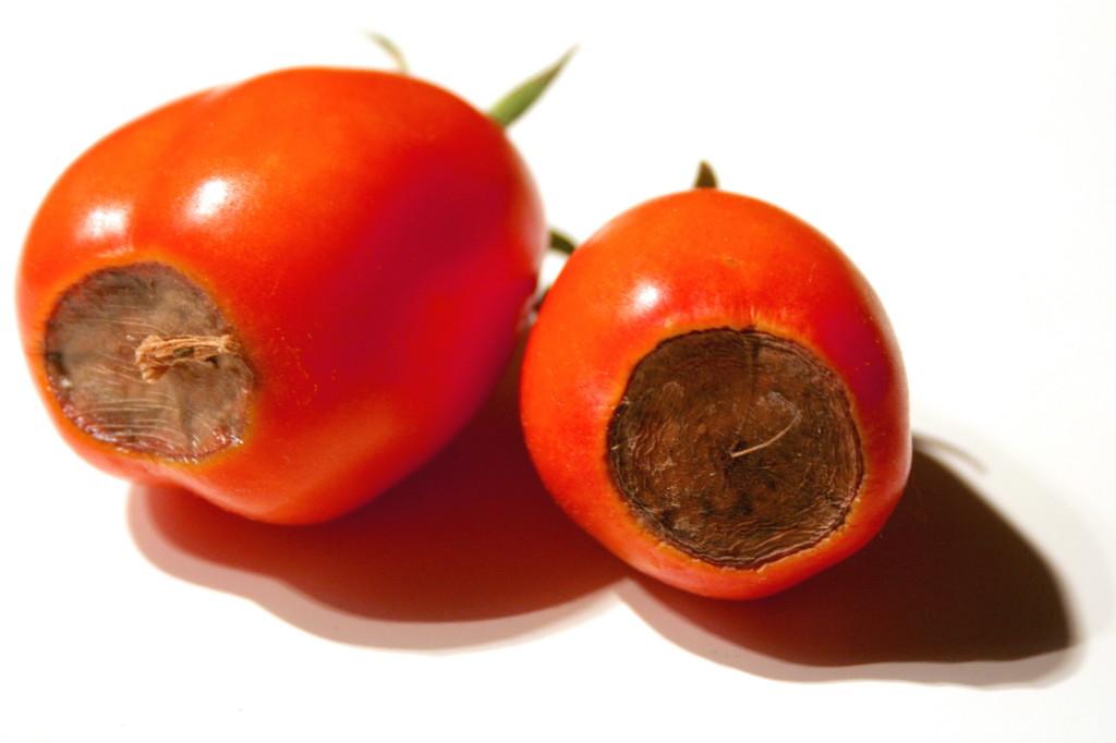 Deficiencia-de-calcio-en-tomate-1024x682