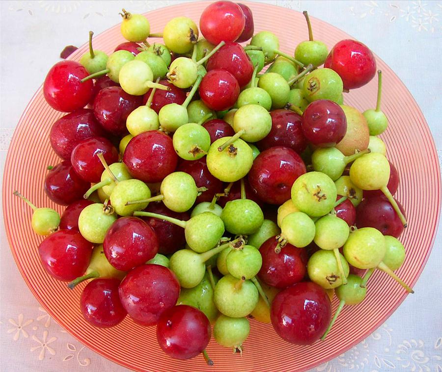 peretes prunes