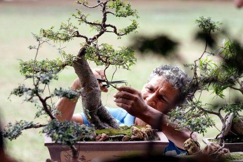 rm festival bonsai 12.jpg 692512063