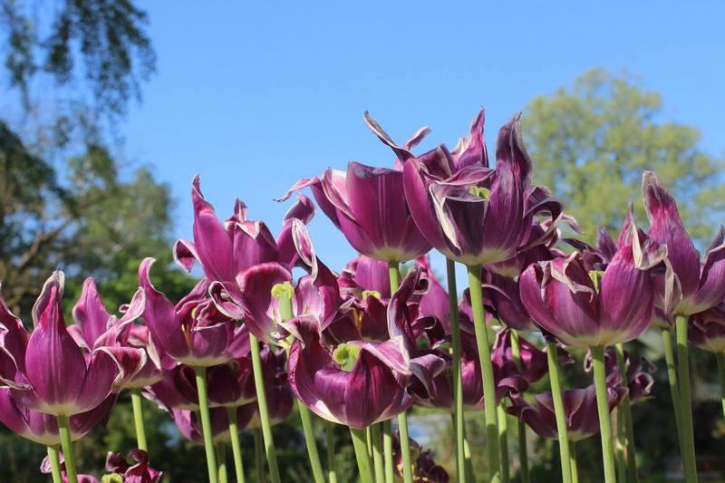06 Hortus Botanicus Amsterdam