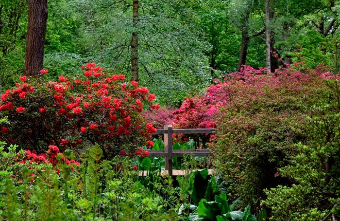 isabella plantation 1