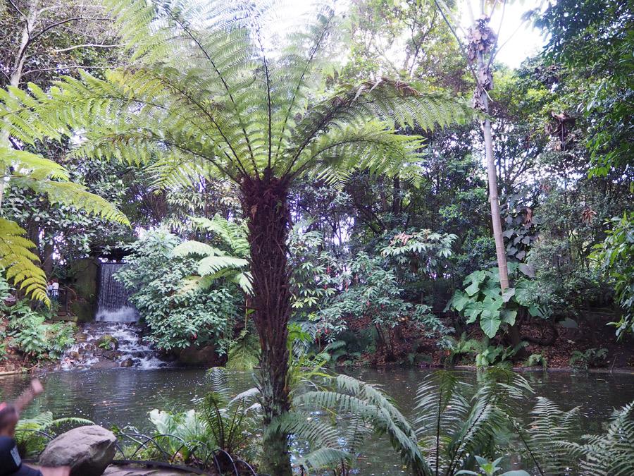 Foto1 jardin helechos