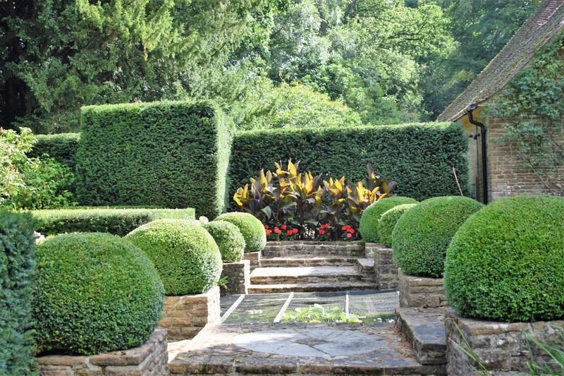 FOTO 9 topiaria canna indica terraza norte 800 px
