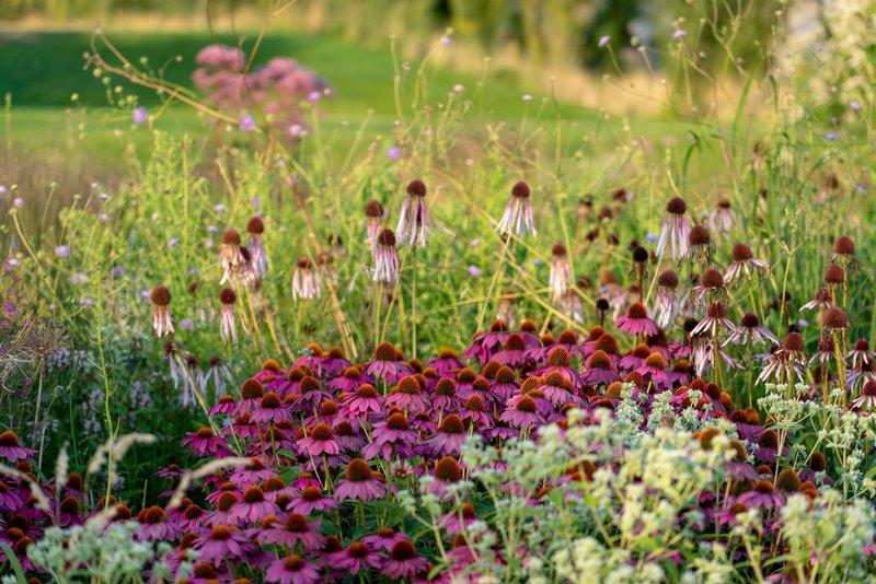 FOTO 5 plantas jardin vlinderhof