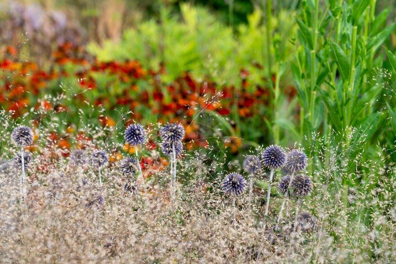 FOTO 9 plantas jardin vlinderhof
