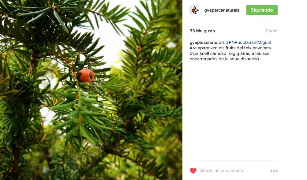taxus instagram gva