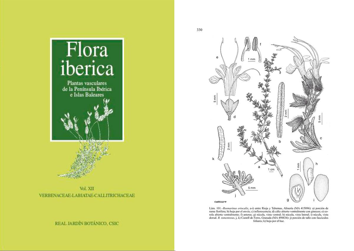 Flora iberica v12