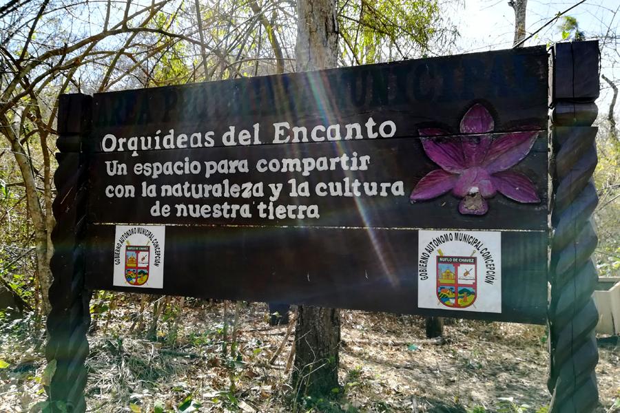 Foto 2 orquidea bolivia
