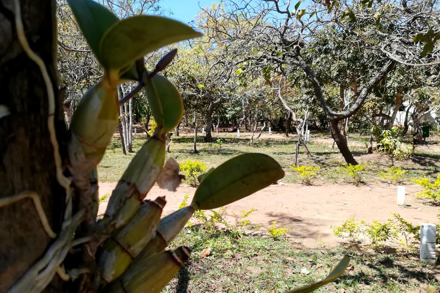 Foto 6 orquidea bolivia