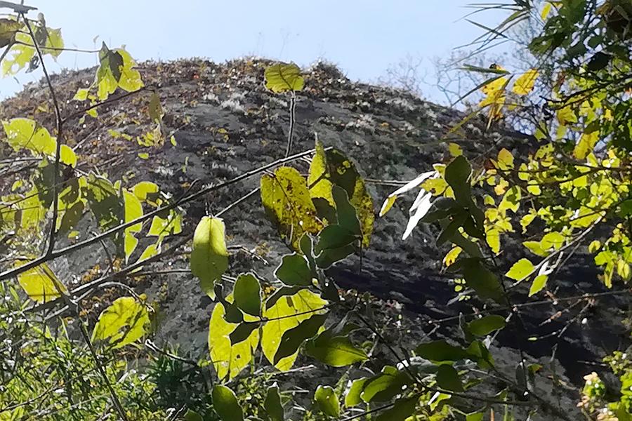 Foto 1 concepcion orquidea