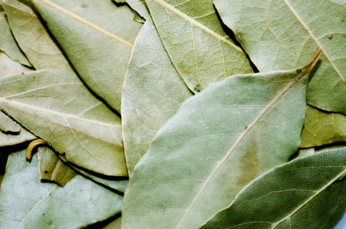 hojas laurel secas