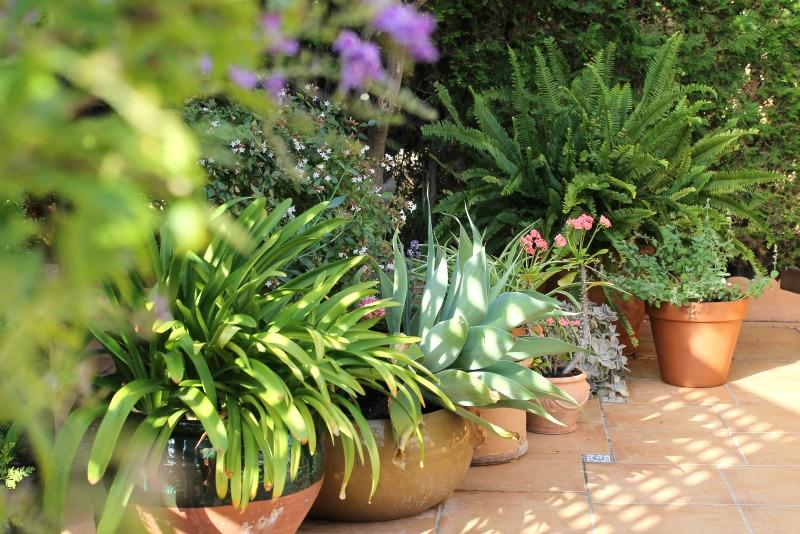 jardin contenedor