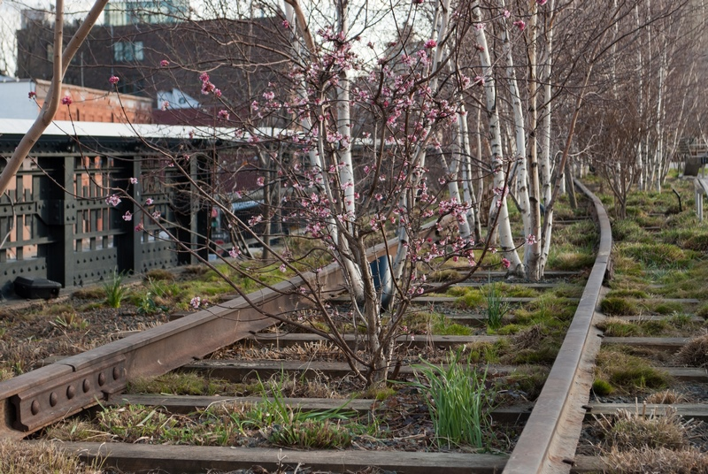 FOTO 4 High Line NYC 800px