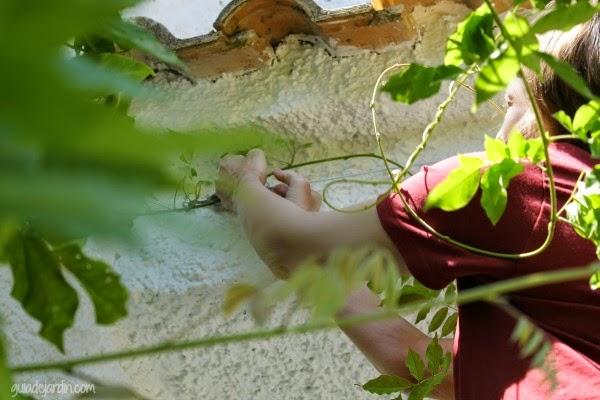 jardineroautodidacta