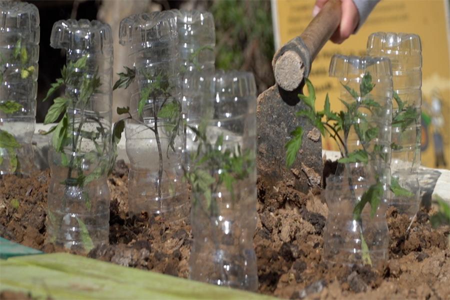 ecoescoles plantar