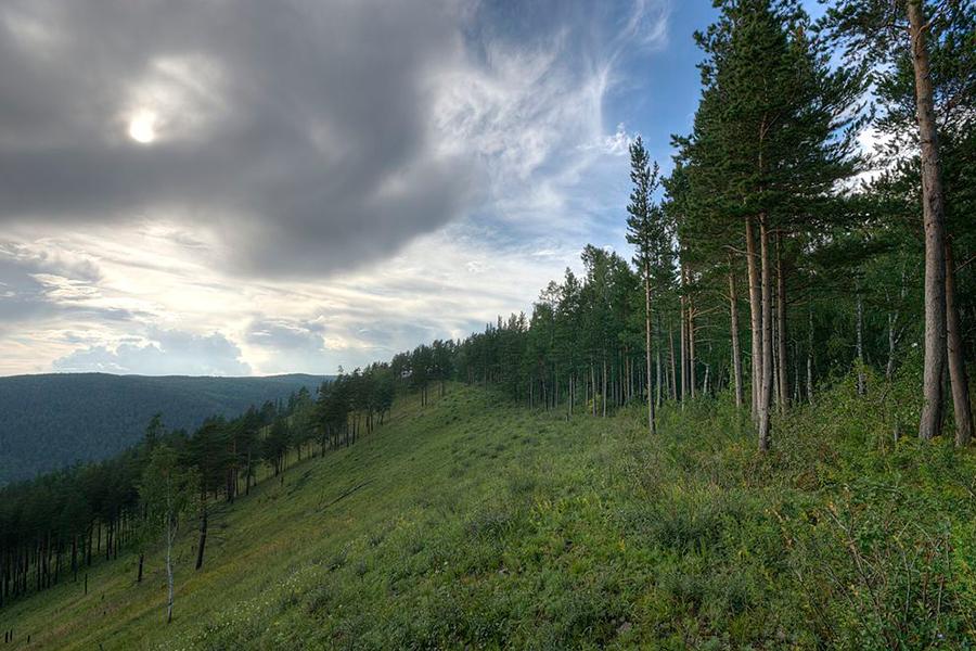 1 Krasnoyarsk Taiga