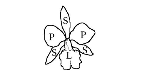 piezas florales