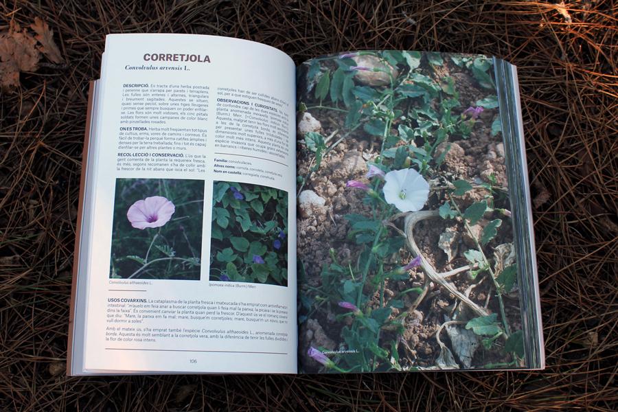Plantes remeis 2