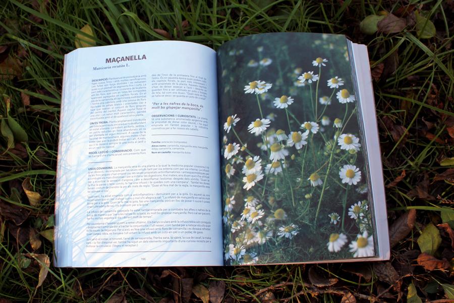 Plantes remeis 3 masanella