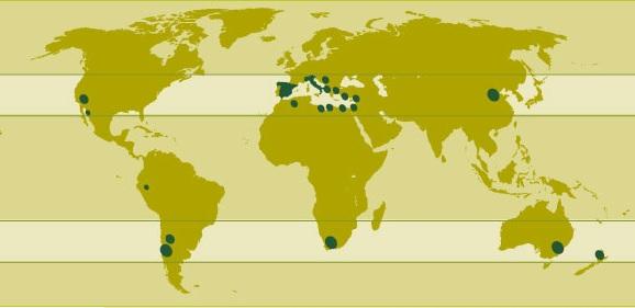 distribucion del olivo en e lmundo