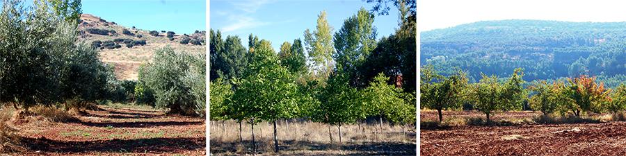 Paseo olivo manzano