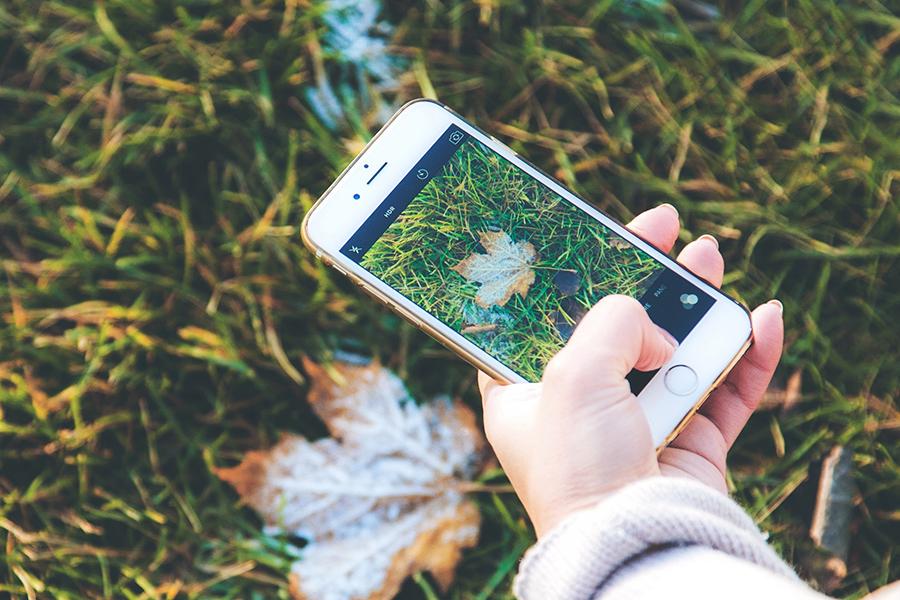 apps botaniques
