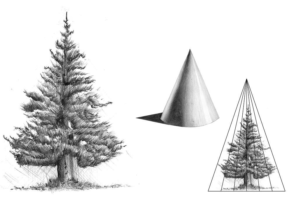 Esquema arbres illustraciencia