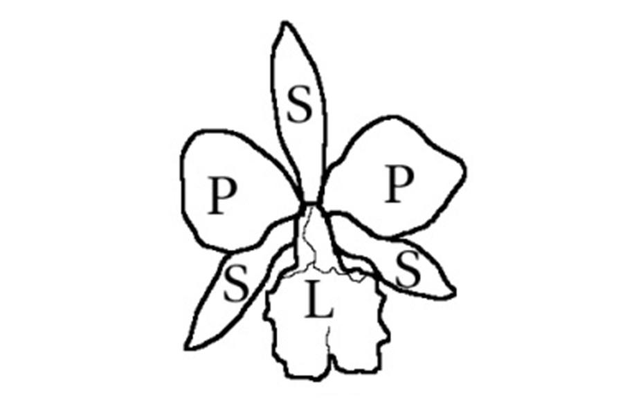 2 esquema flor