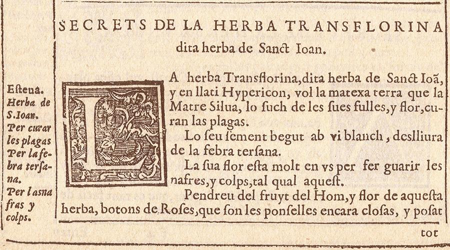 3 Hypericum fra agusti daniel