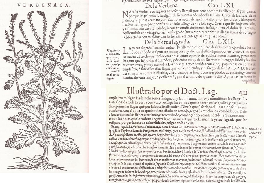 dioscorides verbena