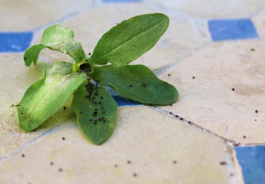 10plantes sembrar