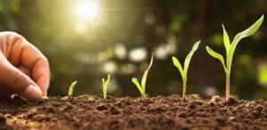 Fitohormones, les arquitectes del món vegetal