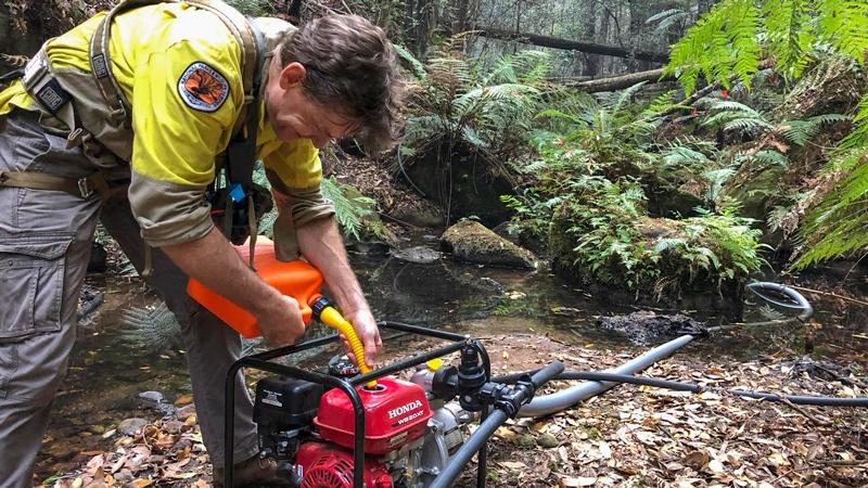 El pi de Wollemi salvat del foc australià