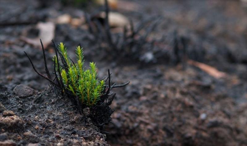 La meteorologia en els grans incendis valencians II
