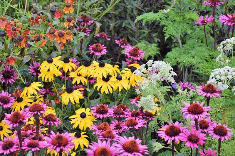'Echinacea', 'Rudbeckia' i 'Helenium' / Fernando Ruz