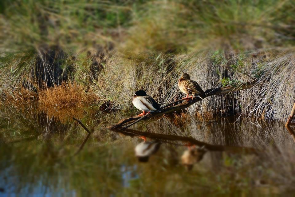 Imatge de GVA Parc Natural de l'Albufera