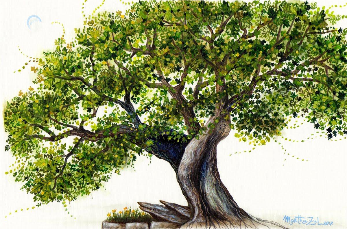 Carballo de Santa Margarita ('Quercus robur'). / Marta Rial Vázquez