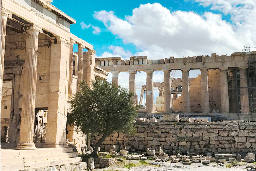L'olivera del temple d'Atenea en l'Acròpoli. / M. J. Aguilar (2018)